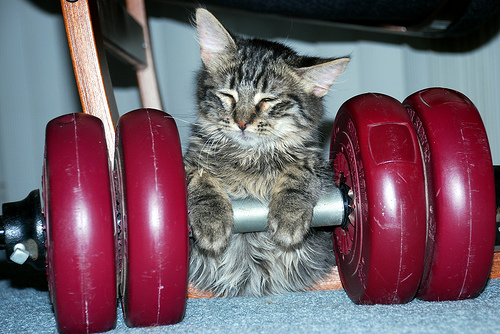 Weightlifting kitty